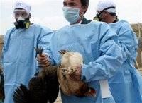 I když s jistotou se o to viru H5N1 tvrdit nedá, současné testy ukazují, že jeho přeměna na kmen snadno přenosný z člověka na člověka nepůjde tak lehko, jak se původně předpokládalo.