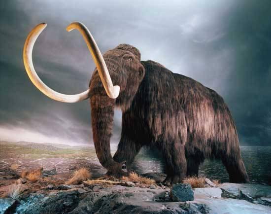 Při vykopávkách na náměstí v Ústí nad Labem bylo nedávno objeveno 6.500 let staré obřadní místo. Překvapením ale není konec. Nyní archeologové narazili na kosti mamuta srstnatého.