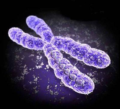 Že všechny ženy mají dva chromozomy X a všichni muži jeden chromozom X a jeden chromozom Y, už nějakou dobu neplatí. Ale ani verze, že za muže může gen SRY (za běžných okolností ubytovaný na chromozomu Y) není úplně přesná.