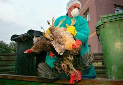 Čínské úřady jsou mezinárodním společenstvím ostře kritizovány za to, že zahraničním laboratořím nedodaly vzorky nové verze viru ptačí chřipky H5N1.