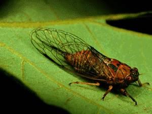 Číňané trhají hmyzu křídla, aby s jejich pomocí mohli vyrábět formy pro nanostrukturní materiály.