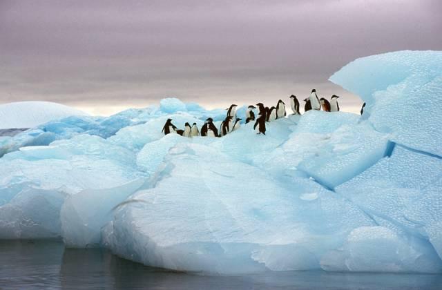 Antarktida je jedním z mála koutů na naší planetě, kde lze ještě najít přírodu bez větších zásahů lidské civilizace. Ano, otevřela se nad ní ozónová díra, ale ta podle posledních výzkumů začíná naštěstí ustupovat. Nad ledovým kontinentem se však nyní vznáší jiná hrozba, plíživá a zákeřná.