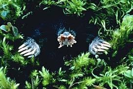 Krtci jsou asi jedni z mála savců, kterým voda v čichání příliš nebrání.