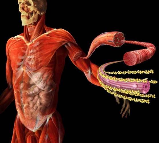 S nástupem genové léčby se otevírá i Pandořina skříňka genetického vylepšení lidstva. Ocitáme se v pokušení vybavit člověka geny pro vlastnosti, které mu příroda odepřela. Máme se do něčeho takového pouštět?