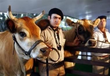 Argentinští genetici oznámili, že přivedli na svět 4 geneticky modifikované jalovice, jejichž mléko bude obsahovat lidský inzulín.
