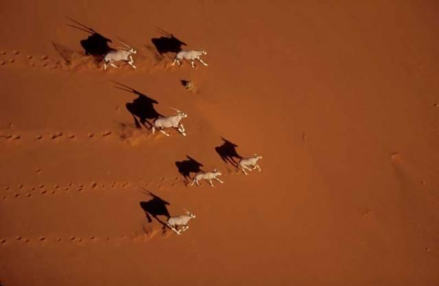 Písek pokrývá pětinu všech pouští světa a neustále ho přibývá. Kde se ale bere? Co to vlastně je?