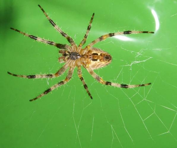 Několik druhů pavouků upletlo v severotexaském národním parku společnou síť.