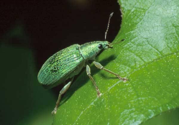 Znáte mimikry? Zejména o prázdninách či dovolených, jich bystrý pozorovatel najde v přírodě mezi rozmanitými rostlinami a živočichy nepočítaně. Nově to nyní začíná platit i o pátrání v prapodivné říši hub.