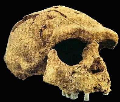 Vědci oznámili nález nejstarších kosterních pozůstatků člověka mimo africký kontinent.
