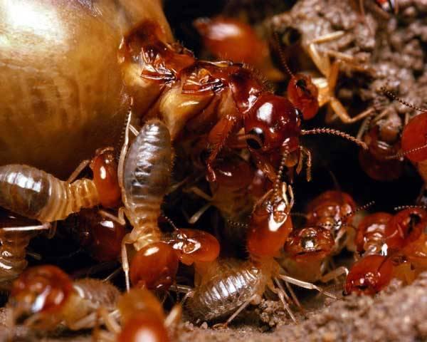 Víte, kdo objevil nejbohatší diamantové ložisko na světě? Nebyl to žádný špičkový geolog vybavený nejmodernější technikou, ale obyčejný termit!