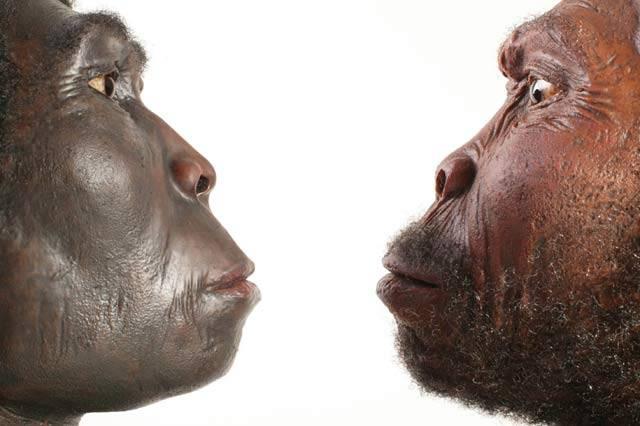 Co povzneslo člověka nad ostatní živočichy? Podle nejnovější studie primatologa Richarda Wranghama z Harvardovy university v USA  to bylo vaření.