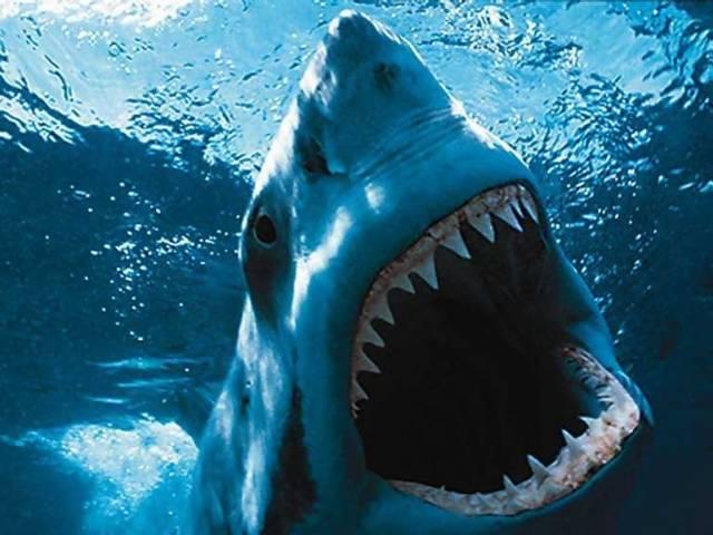 Vlna útoků nebezpečných predátorů vedla mexické vědce k neobvyklému kroku.