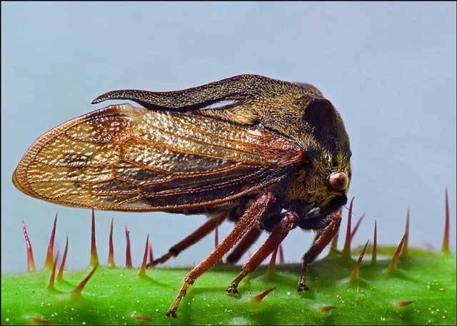 V říši hmyzu najdeme ta nejfantastičtější stvoření, která kdy po Zemi chodila. Nad některými exempláři zůstanou stát v údivu i skalní příznivci sci-fi filmů, ve kterých se to mimozemskými potvorami jen hemží.