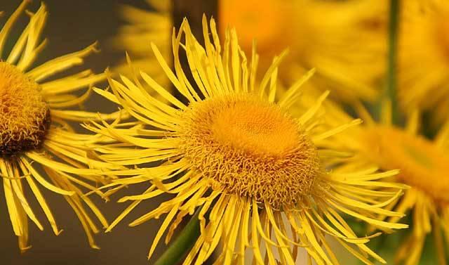 V minulém čísle přineslo 21. STOLETÍ pohled na 10 nejobtížnějších invazních živočichů. Nebezpečné invazní druhy však najdeme i mezi rostlinami. Ty dokážou totiž úplně proměnit charakter prostředí, do nichž pronikají, a zcela tak zničit jak původní flóru, tak faunu, která s ní byla pevně svázána.