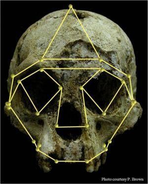 """Od té doby, co byly v roce 2003 na indonéském ostrově Flores objeveny zbytky několika drobných lidských koster, neustaly debaty o tom, jaké místo v evoluci rodu Homo těmto """"hobitům"""" vlastně přináleží. Nedávno uveřejněná studie amerických antropologů přidává další argument na stranu těch, kteří považují floreského člověka za samostatný druh."""