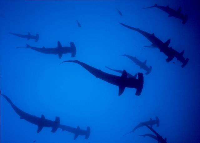 Dnes už na zeměkouli stěží najdeme místo, na které se lidem ještě nepodařilo proniknout. Kromě pevné země, která nám evoluce původně přisoudila, se dnes dokážeme pohybovat jak vysoko v oblacích, tak na hladině či v hlubinách vod. Všude, kam se podějeme, však svou přítomností rušíme původní obyvatele. Neméně to platí i pro mořské vody.