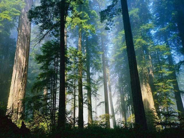 """Těžaři dřeva profitují z globálního oteplování: Kyselé deště nemusí vždy jen škodit: Kyselé deště jsou považovány za jednoho z nejhorších """"zlých duchů"""", které vypustil člověk do planetárního klimatu. Nová studie amerických vědců ukazuje, že změny podnebí nemusí přírodu vždy jen ničit."""