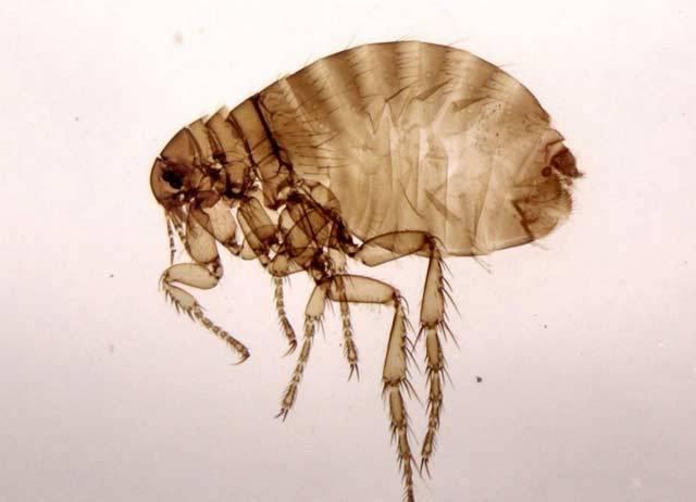 Za parazity (cizopasníky) považujeme živé organismy, které trvale či alespoň dočasně žijí na úkor jiného, většího organismu – hostitele. Odebírají mu živiny, čímž ho nějakým způsobem více nebo méně poškozují. V následujícím přehledu se věnujeme především parazitům člověka.