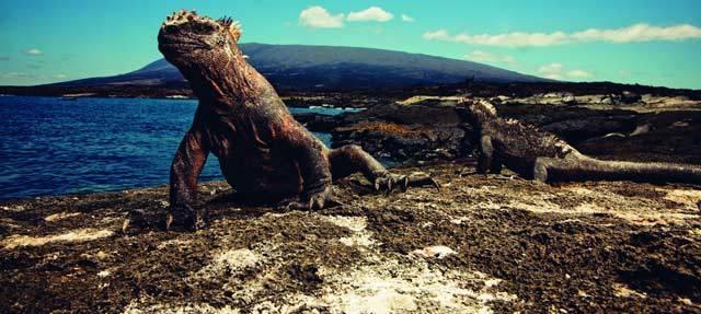 Hodinářská manufaktura IWC Schaffhausen pokračuje v důsledném ekologickém konání a angažuje se na ostrovech Galapágy. Partnerství s Nadací Charlese Darwina je začátkem dlouhodobě plánované spolupráce v oblasti ochrany fascinujících pokladů přírody na naší Zemi: ostrovů Galapágy s bohatstvím druhů a jedinečným citlivým ekosystémem, které jsou v mnoha směrech ohroženy.