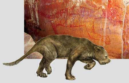Jelikož si po svém odtržení  musela Austrálie vystačit výhradně s původními zdroji, náleží stejně jako prakticky všichni ostatní místní savci i původní místní predátoři do řádu vačnatců. Na zdi jedné z jeskyní nalezli nedávno archeologové portrét dávno vyhynulého predátora, vačnatého lva.