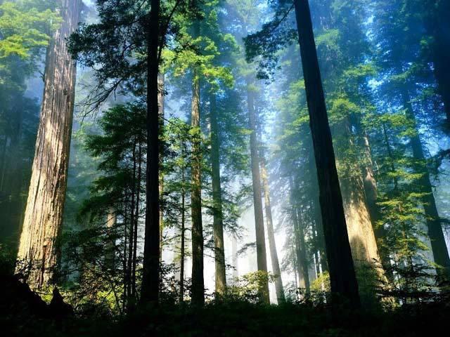 Podle nejnovějších údajů lidé již zničili polovinu lesů. Přesto přes 70 % rostlin na Zemi tvoří stále dřeviny – vytrvalé rostliny se zdřevnatělými stonky. Některé jsou trpasličí, jiné ční vysoko k nebesům jako obři. Dělí se na tři základní skupiny – stromy (arbor), keře (frutex) a polokeře (suffrutex). Mnohé mají společné.