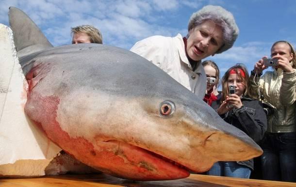 """V sítích grónských rybářů často uvíznou i obrovití žraloci, jejichž těla dříve přicházela nazmar. Dánské vědce napadlo, že je to vlastně škoda a snaží se najít cestu, jak tyto nevítané úlovky využít. Jedním ze způsobů by mohla být i výroba """"zelené"""" energie."""