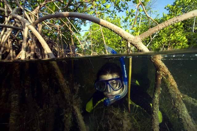 Typickým biotopem, který lemuje pobřeží mělkých teplých tropických a subtropických moří, jsou husté a obtížně prostupné mangrové bažiny. Porosty mořské vegetace, které se táhnou nesčetné kilometry podél písčitých pobřežních mělčin, tvoří nárazníkovou zónu – přechod mezi vodstvy oceánu a souší.