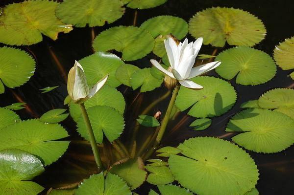 Když se na Zemi zhruba před 140 milióny objevily první kvetoucí rostliny, měla už rostlinná říše  pěkných pár stovek miliónů let evoluce za sebou. Jakmile však spatřily světlo světa, chytily kvetoucí rostliny svou příležitost pevně za pačesy a suchá zem byla rychle jejich. Jak ale k této důležité evoluční inovaci vlastně došlo?