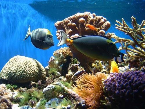 Korálové útesy mělkých a teplých moří jsou spolu s deštnými pralesy místy s největší rozmanitostí přírody, jako naše planeta zná. Němečtí vědci nedávno potvrdili teorii, že většina mořský organismů se vyvinula právě zde.