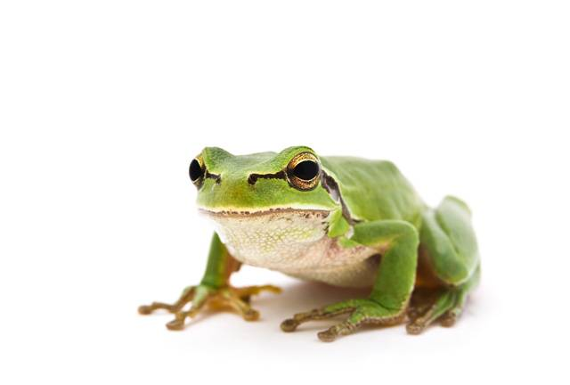 Řadu druhů obojživelníků, především žab, v posledních letech sužuje nemoc způsobovaná parazitickou houbou ze skupiny chytridiomycet, Batrachochytrium dendrobatidis. Tato houba napadá keratin, který je součástí vnitřního »lešení« kožních buněk.