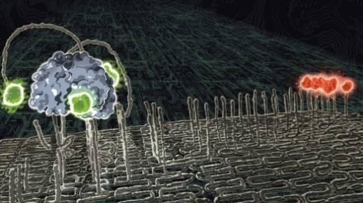 Zmenšování technologií do velikostí, kde se šíře lidského vlasu podobá šíři Amazonky, zažilo v nedávné době další skok. Tým amerických vědců z několika prestižních univerzit publikoval v časopise Nature článek, v němž popisuje svého robůtka o velikosti pouhé 4 nanometry.