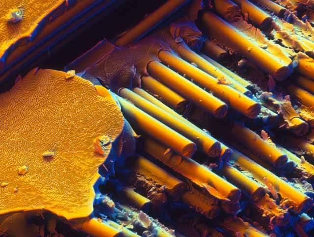 Skleněná vlákna jsou velmi lehká, pružná a odolná proti extrémním výkyvům teploty (i požárům) a chemikáliím. Využívají se proto ke zpevňování, izolaci či v kabelech k přenášení dat. Elektronový skenovací mikroskop zachytil vláknitou strukturu skla a polyesteru 2200x zvětšenou.
