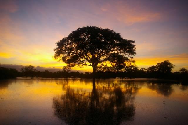Amazonská pánev porostlá tropickým deštným pralesem je mimo vších pochybnost nejbohatším ekosystémem světa. Proč ji však v druhovém bohatství neporážejí pralesy africké či asijské? Podle posledních studií se klíč k pochopení tohoto jevu skrývá v geologické minulosti Jižní Ameriky.