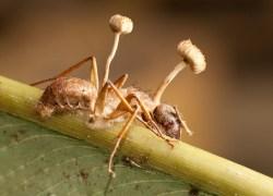 Organismy vpodručí parazitů
