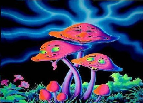 """Co dělají """"magické houbičky"""" našemu mozku?"""