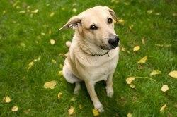 Psi s námi vědomě manipulují