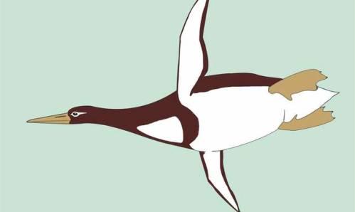 Paleontologové objevili fosílii prehistorického tučňáka