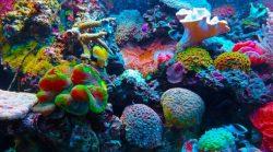 Jak zachránit korálové útesy? Vědci vyšlechtí nejodolnější druhy