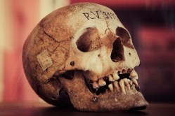 """Jak se rozkládá tělo? Britští vědci se chystají založit """"farmu mrtvol"""""""