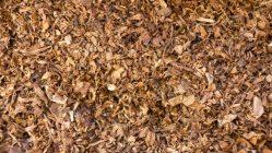 Novinka v boji proti škůdcům: Postřik z tabáku