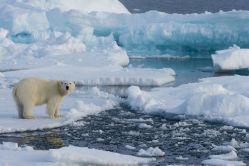 Dánové se chystají otevřít severní mořskou cestu