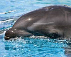 Vědce překvapil objev křížence velryby a delfína