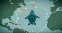 Zvířata používají kompasový smysl