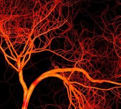 Vědci v kostech objevili novou síť krevních cév