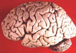 Jídlo má dopad na mozek, zjistili vědci