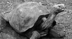 """Byla nalezena """"vyhynulá"""" želva"""