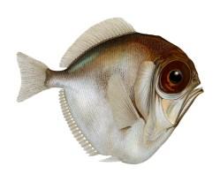 Studie odkryla dosud neznámý způsob barevného vidění u ryb