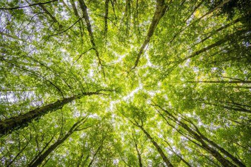 Jak se žije stromům v Brně? Vědci z Mendelovy univerzity zkoumají jejich stresové podmínky