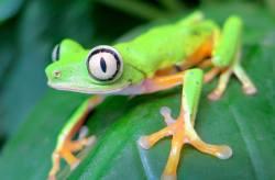 FrogPhone je nové zařízení pro monitorování žabích populací