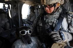 Jak přelstít technologii? Americká armáda chce svěřit komunikaci zvířatům